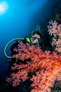 Diver - Elphinstone