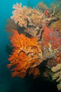 Corals - Palau
